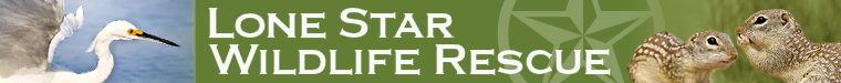 Lone Star Wildlife Rescue